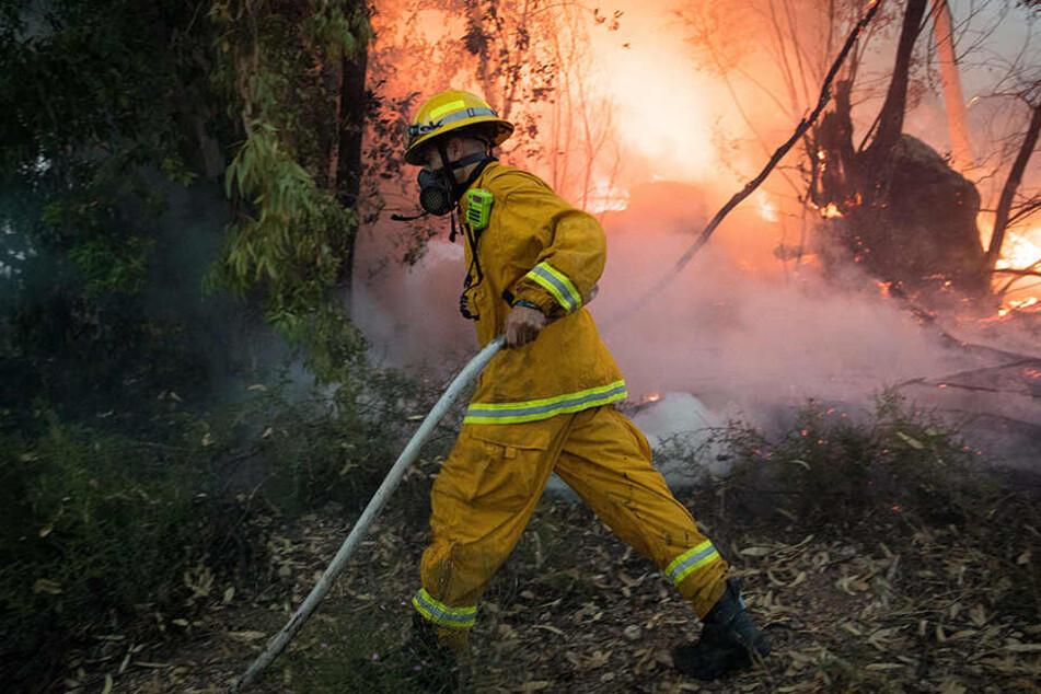 Emsig! Einsatzkräfte der Feuerwehr kämpfen gegen die Flammen.