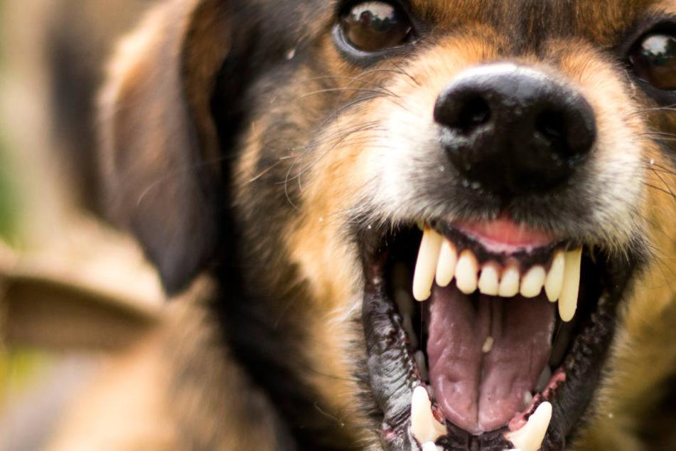 Freilaufender Hund beißt Fünfjährige ins Gesicht: Schwer verletzt in Klinik!