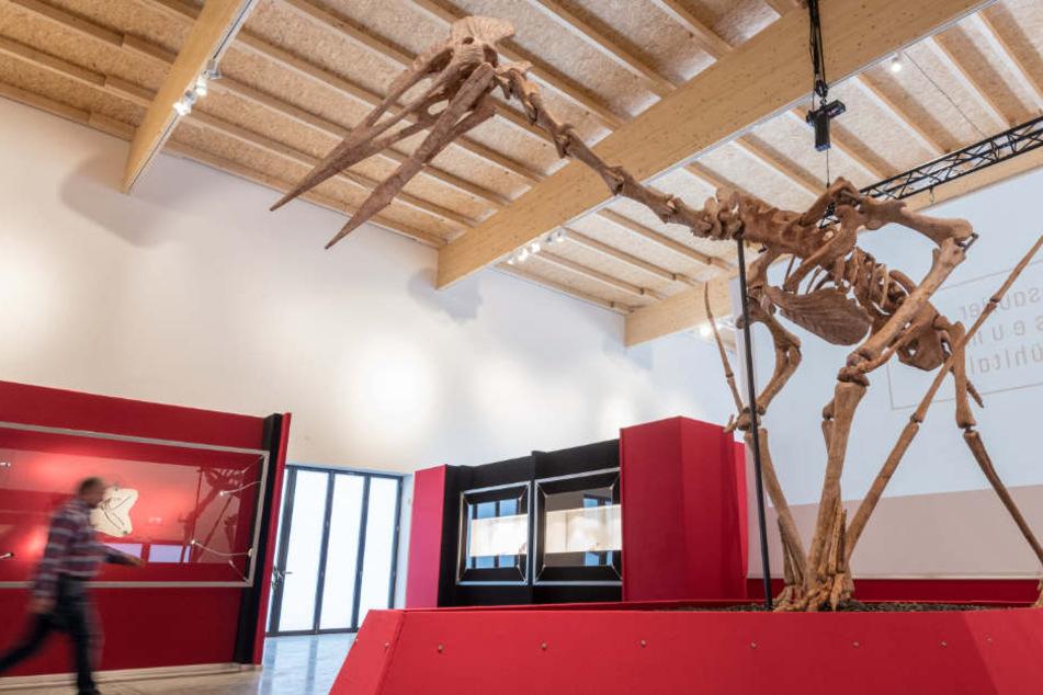 Das Modell eines Riesenflugsauriers steht im Dinosaurier Museum Altmühltal.
