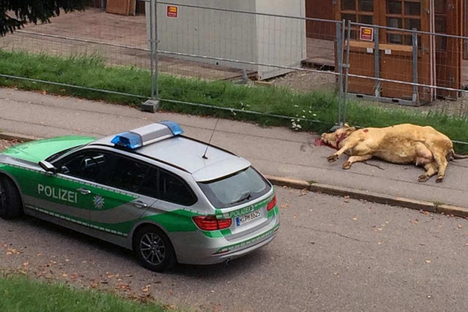 Die Flucht einer Kuh endete in Bayern tödlich: Das Tier hatte eine Joggerin attackiert.