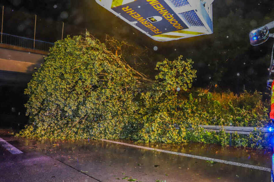 Bäume krachen bei heftigem Gewitter auf die Autobahn