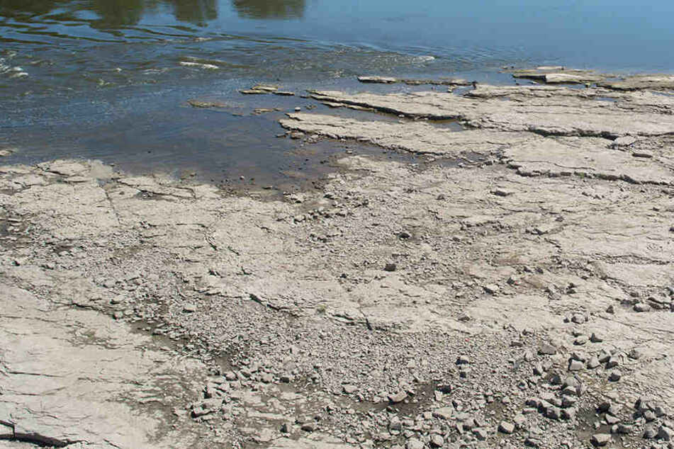 Viele Gewässer in Sachsen haben derzeit extremes Niedrigwasser. (Archivbild)