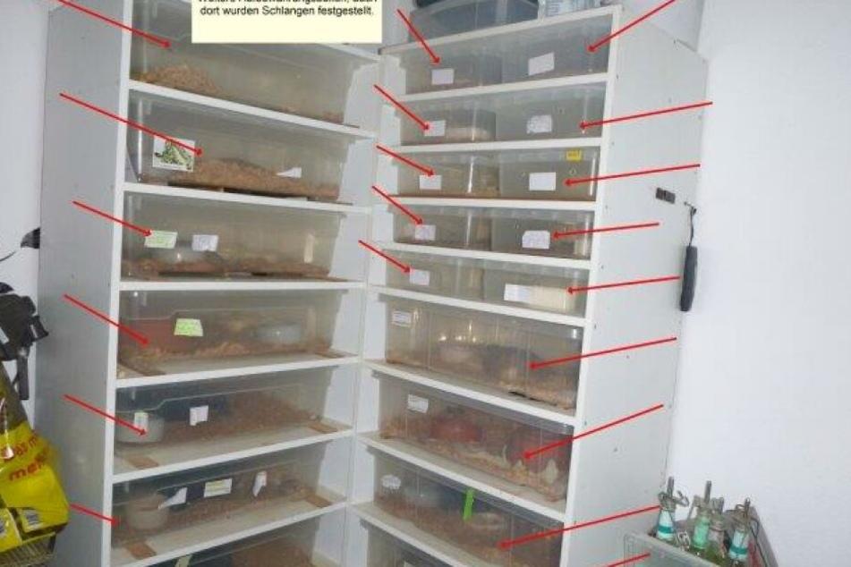 In der Wohnung fanden die Polizisten etliche Boxen mit Reptilien.