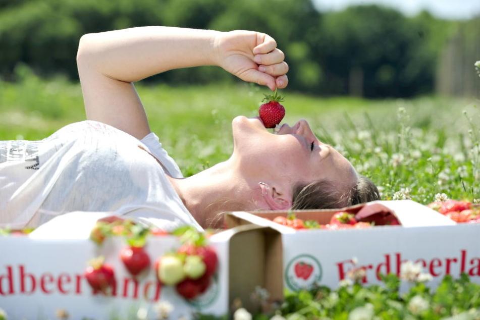 Dem verlockenden Genuss reifer Erdbeeren kann auch die Fruchthof-Chefin Bianca Scholz (32) nicht widerstehen.