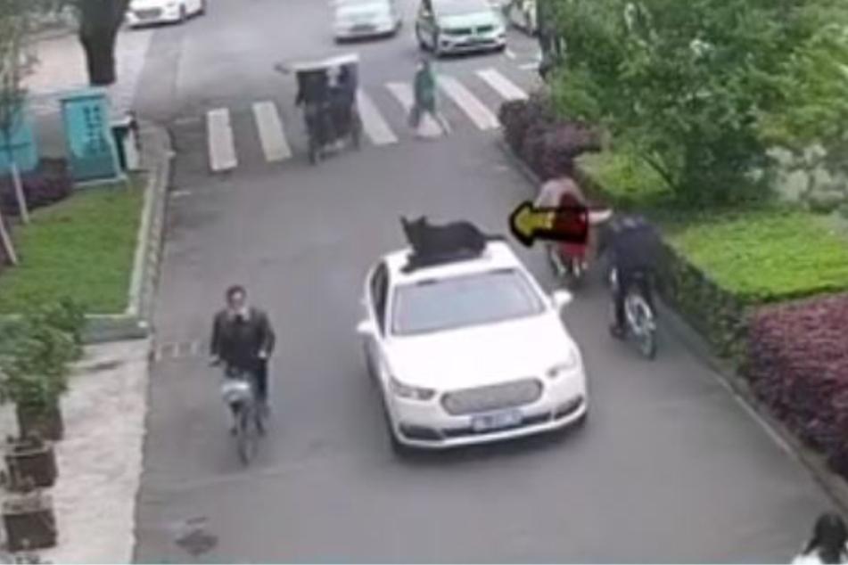 Der Hund zeigte Mut, blieb auf dem Dach sitzen.