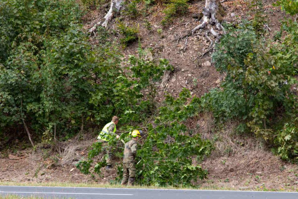 Wegen Dürre: Bundeswehr muss Bäume wegsprengen
