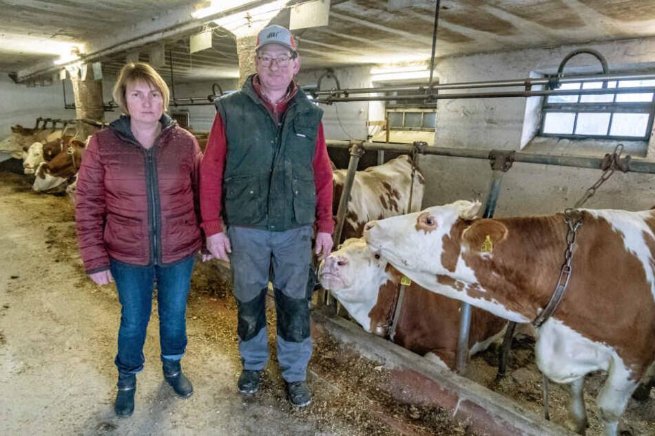 Die Landwirte Tanja und Josef Wiedenbeck, von deren Hof die Kuh entkam, nehmen den Rummel gelassen.