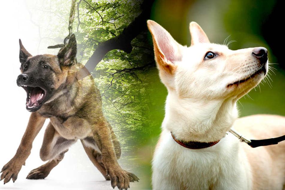 """Nicht alle Hunde sind immer """"verträglich"""" mit anderen Menschen oder Hunden."""