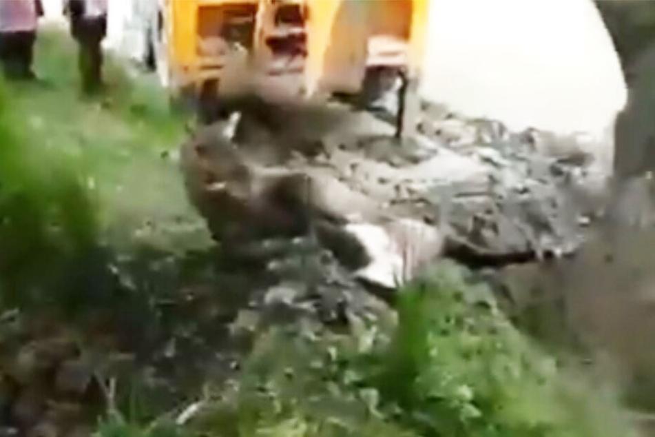 Mit einem Bagger wurde die Antilope in den Graben geschoben.