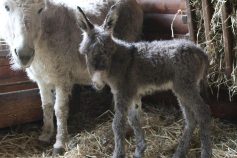 Der kleine Till steh neben seiner Mutter Kiba.