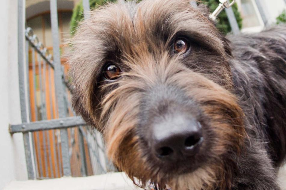 Frau vertraut Bekanntem ihren Hund an, damit er auf ihn aufpasst, doch der tut Unglaubliches