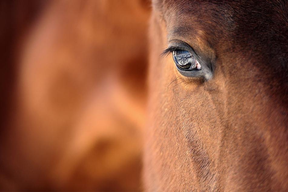 Brutal: Mann tötet Pferd durch Messerstiche