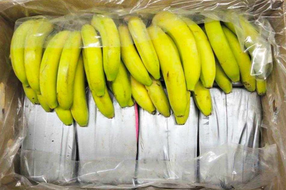 Unter 39 Bananenkisten war das Kokain versteckt worden.