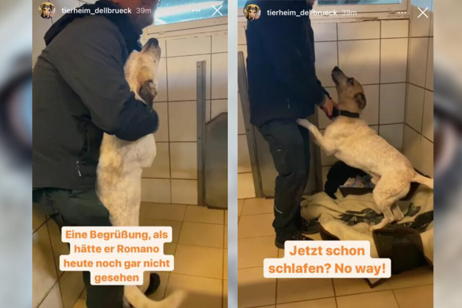 In der Instagram-Story zeigte das Tierheim Köln-Dellbrück, wie temperamentvoll Mischling Fritz ist.