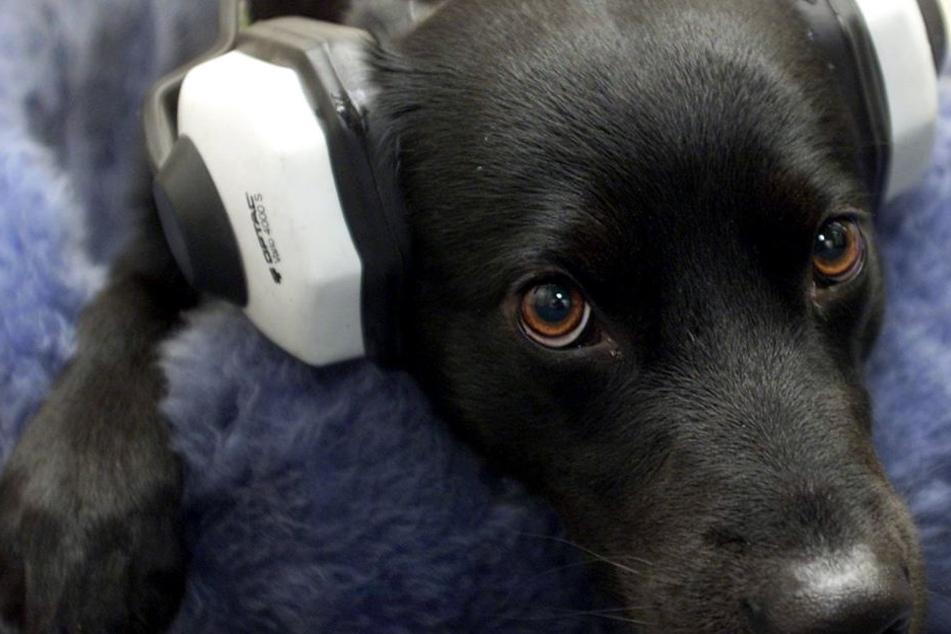 """Silvester ist für die meisten Hunde ein """"harter"""" Tag."""