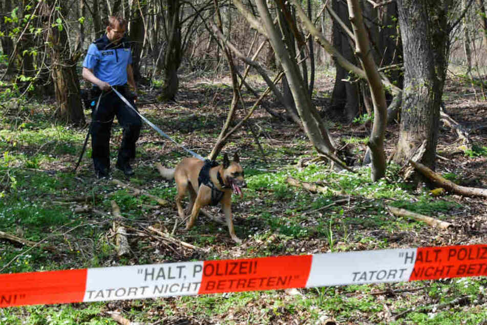 Mit einem Leichenspürhund sucht ein Polizist in einem Waldgebiet bei Brieselang nach der vermissten Georgine Krüger.