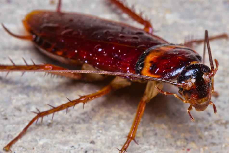 Wegen Kakerlaken: Ekel-Alarm an Grundschule hört nicht auf