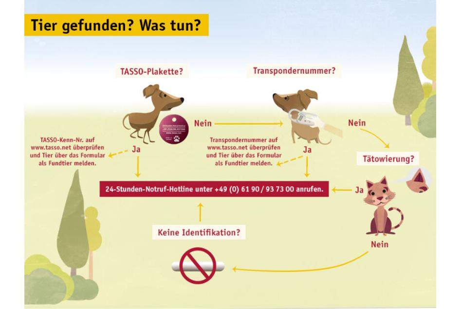 Tier gefunden - Was ist jetzt zu tun? Das erklärt diese Grafik von Tasso.