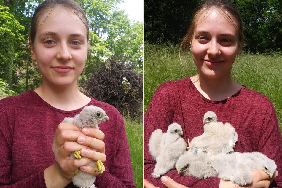 Vogelretterin Saskia (19) von der Wildvogelauffangstation mit den geretteten Turmfalken-Küken.