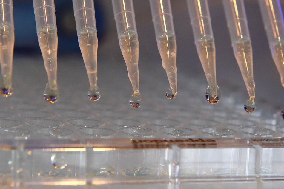 Borna-Infektionen in Deutschland: Das tödliche Spitzmaus-Virus