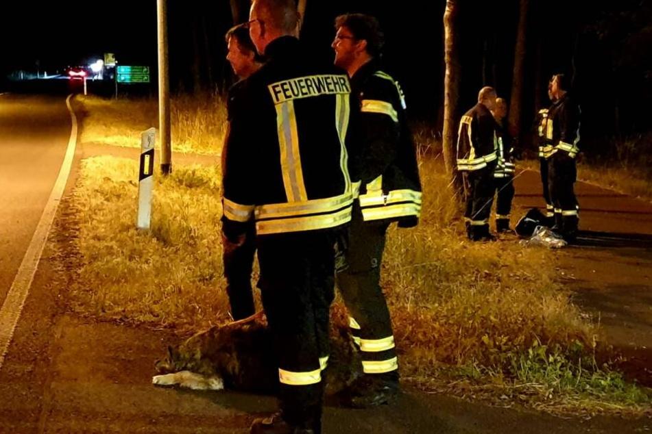 Die Beamten brachten vier Personen, die sich noch auf dem Gelände befanden, in Sicherheit.