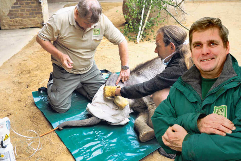 Leipzigs Zoo-Doc Andreas Bernhard erklärt: So operierten wir den kleinen Elefanten