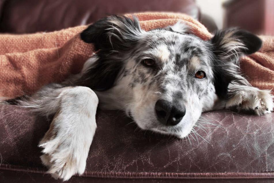 Mittel aus dem Haushalt können auch bei kranken Tieren Linderung schaffen. (Symbolbild)