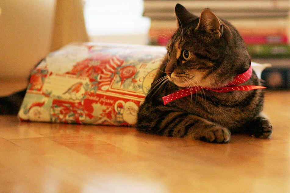 Tierheime wollen nicht, dass Katzen, Hunde & Co. als Geschenk unter dem Weihnachtsbaum landen.