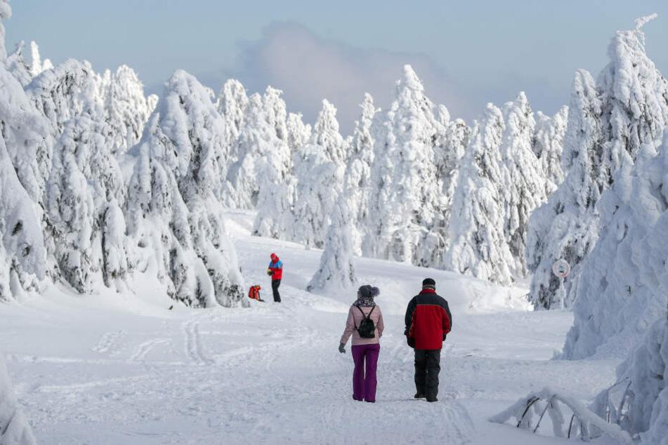 Nicht nur Skifahren waren im Erzgebirge unterwegs, sondern auch Wanderer.