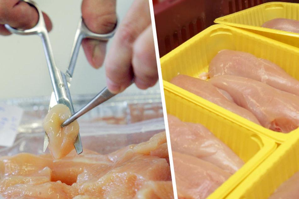 Wissenschaftler analysieren Hähnchen-Frischfleisch.