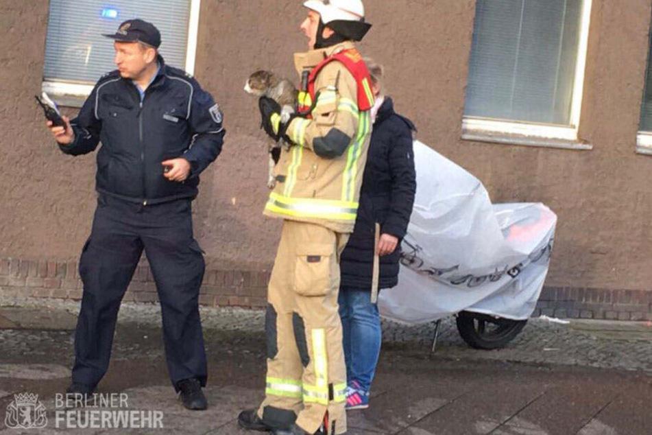 Ein Feuerwehrmann hält die Katze nach der Rettung fest im Arm.
