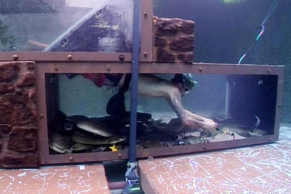Nachdem Matthias kläglich scheiterte, taucht Daniele erfolgreich durch die Unterwasser-Tunnel.