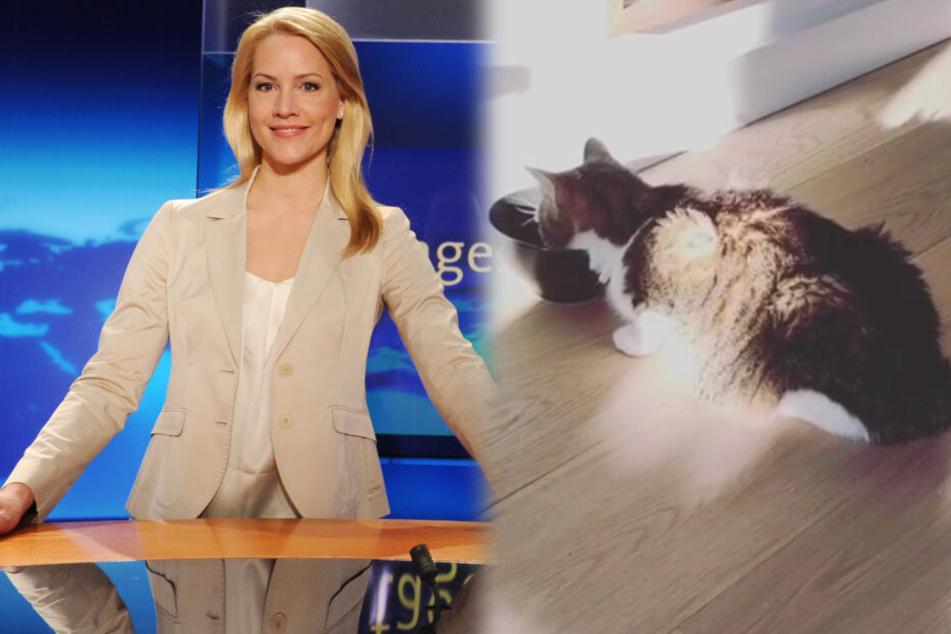 Kopfschütteln bei Miss Tagesschau: Was ist mit Judith Rakers' Katze los?