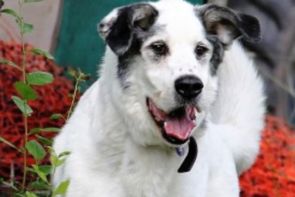 Von der Straße ins Wohnzimmer: Hund Bonachon wird beim Kuscheln ganz schön wild