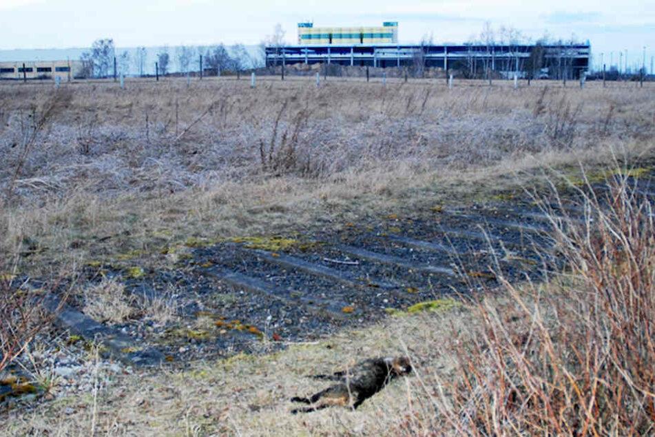 An Bahngleisen wurde das getötete Tier gefunden.