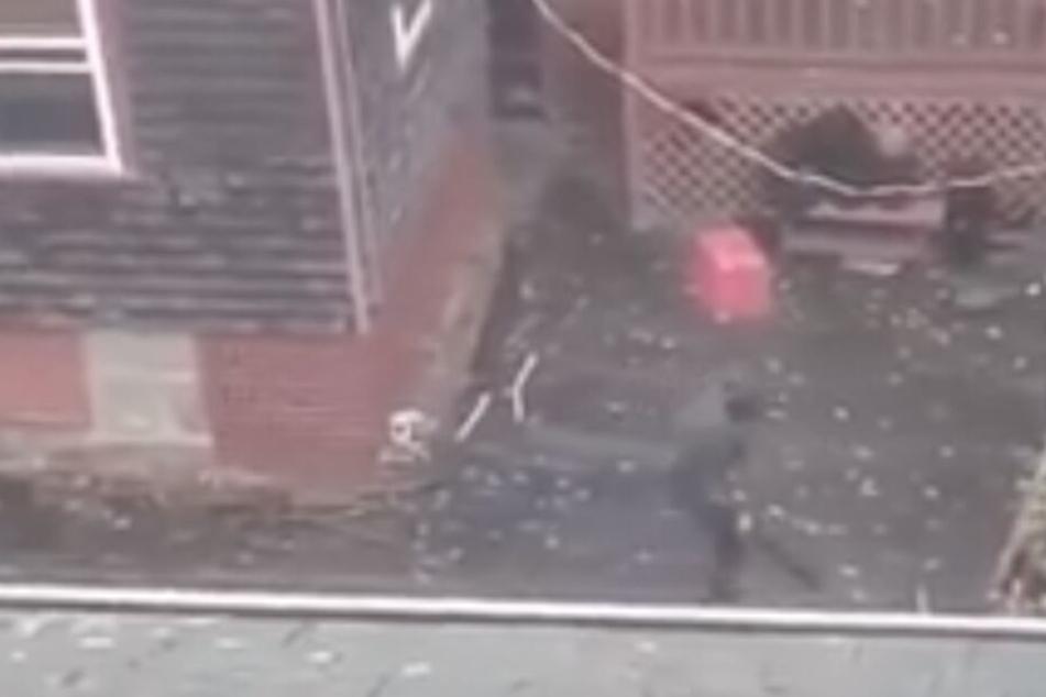 Mann prügelt auf seinen Hund ein und die Polizei braucht 3 Stunden