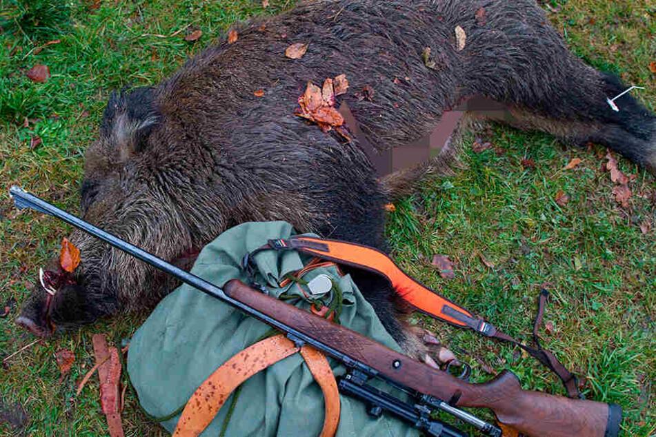 Ein geschossenes Wildschwein liegt neben einem Gewehr und einem Rucksack. Sachsen lässt mehr Wildschweine töten, um der Afrikanischen Schweinepest vorzubeugen.