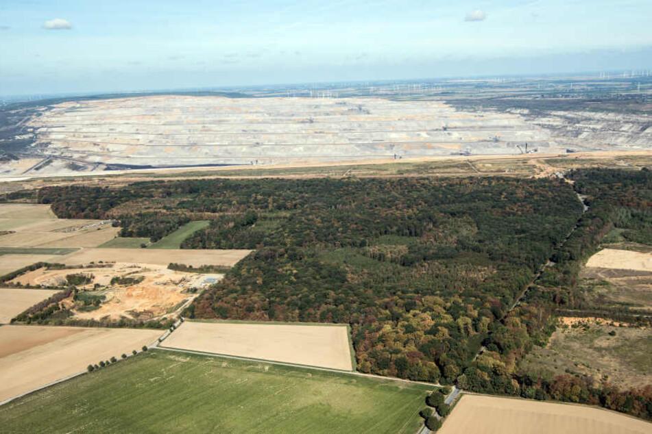 Ungewisse Zukunft: Derzeit gilt für den Hambacher Forst ein Rodungsstopp (Archivbild).