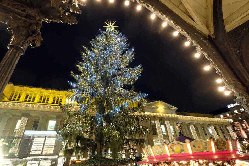 Im letzten Jahr schmückte dieser Prachtbaum den Schlossplatz.