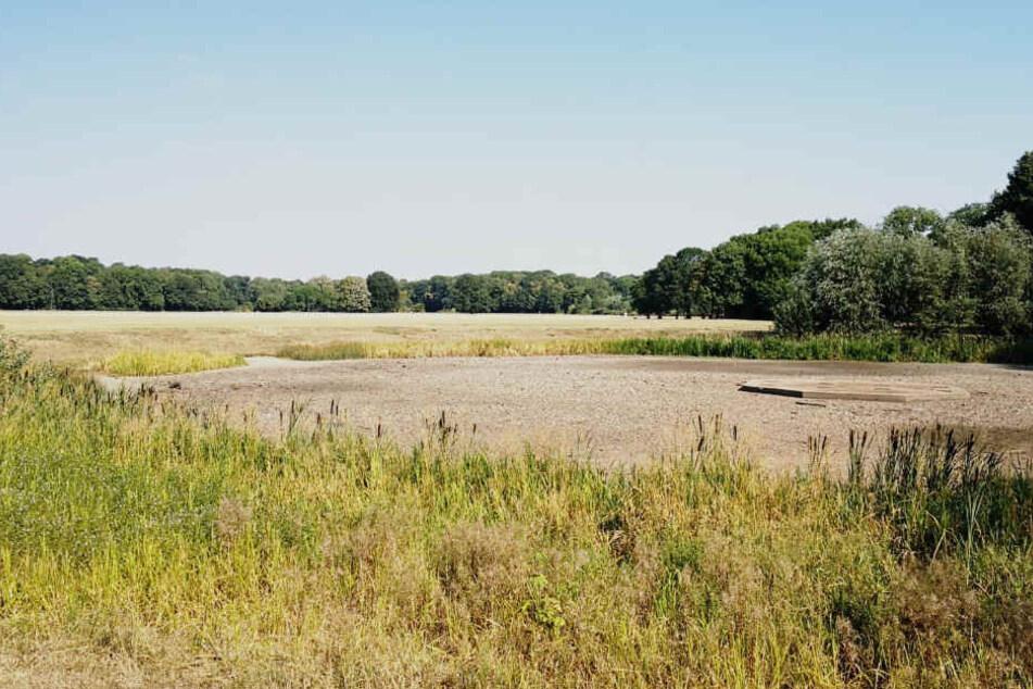 Auch das ehemalige Grün rund um den Teich gleicht einer Herbstlandschaft.