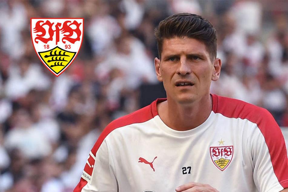 So könnte der VfB gegen Hansa Rostock auflaufen
