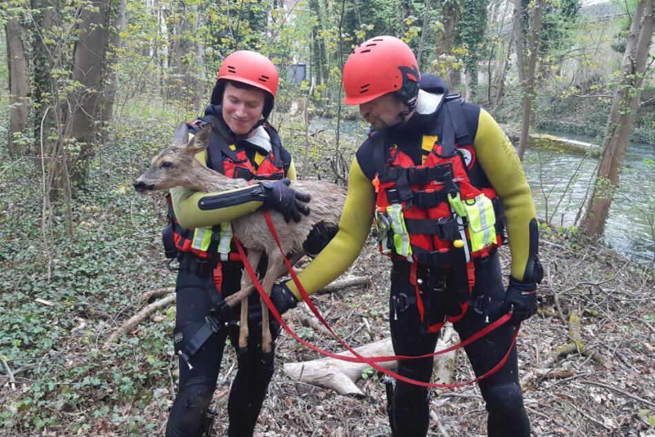Einsatzkräfte halten das gerettete Reh in den Armen.