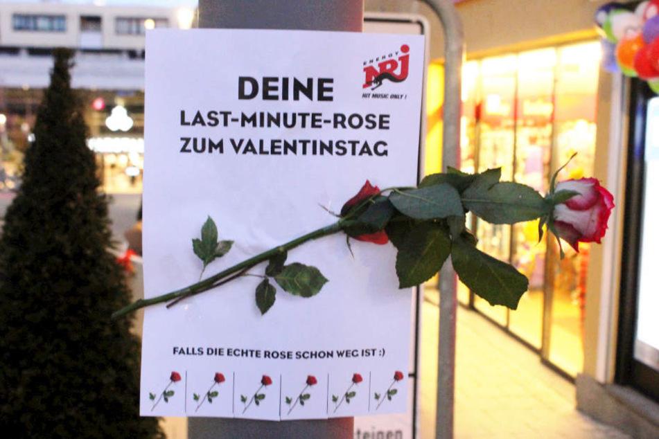 Überall in Ludwigsburg wurden vom Radiosender Energy gratis Rosen-to-go aufgehängt.