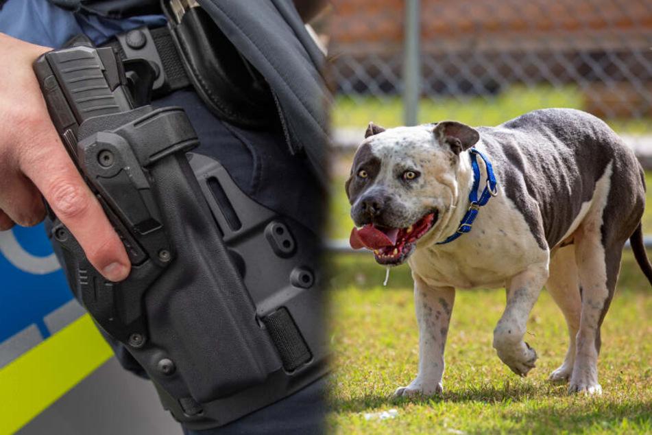 Hund gerät außer Kontrolle: Polizei knallt ihn auf offener Straße ab!