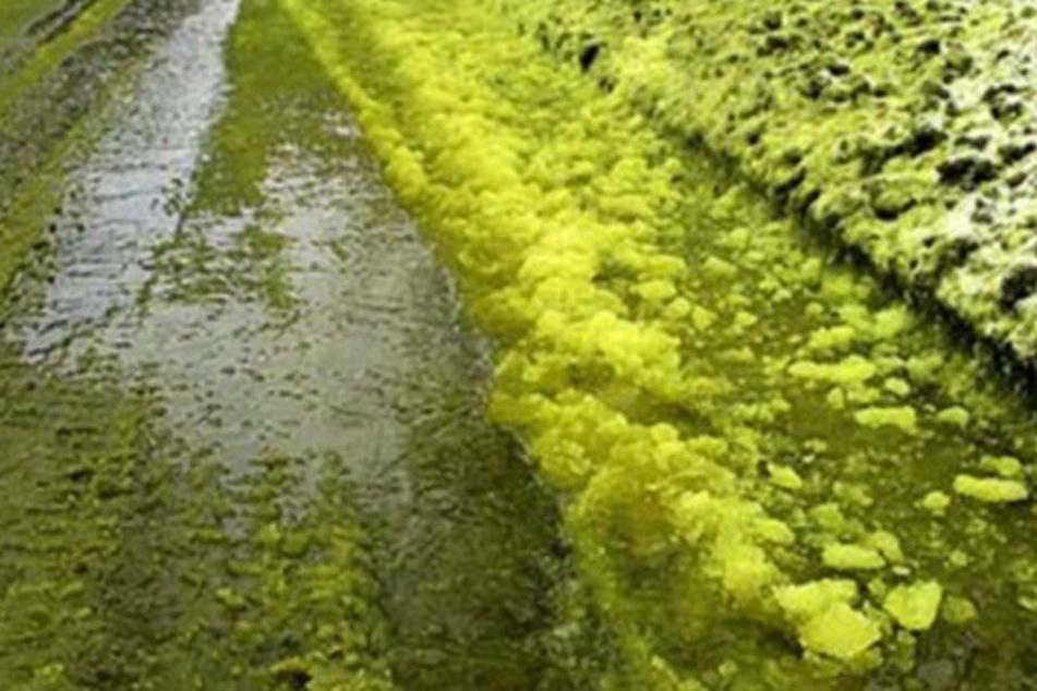 Giftiges Grün - im wahrsten Sinne des Wortes. Der dreckige Schnee ist die Folge von Umweltverschmutzung.