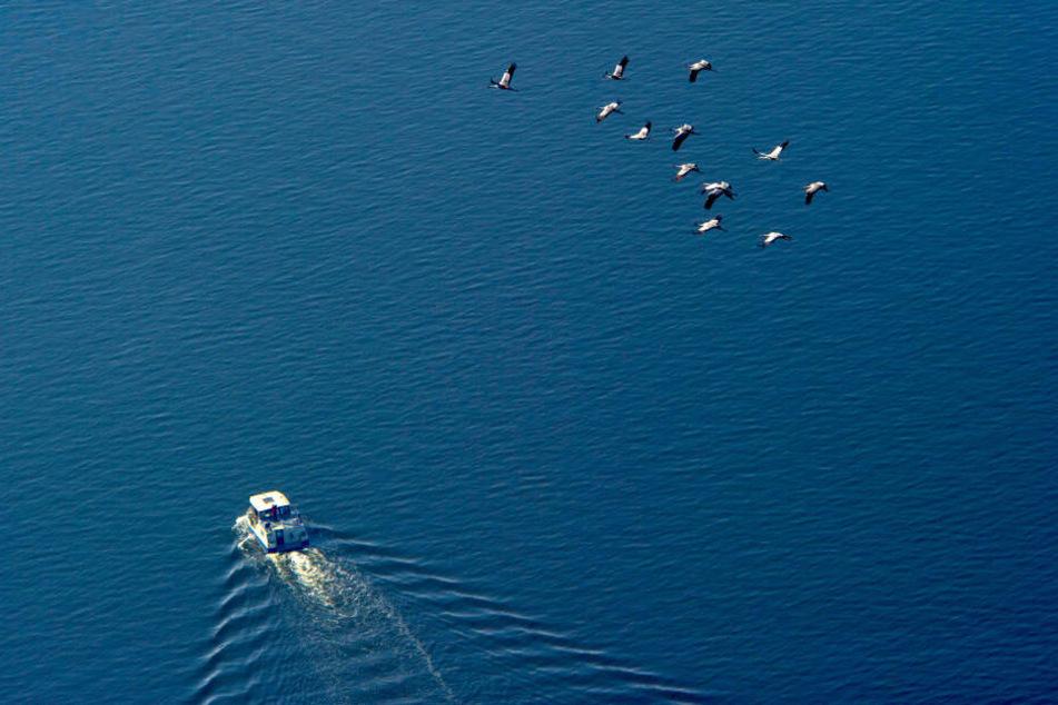 Vögel ziehen über die Ostsee nahe der Insel Bornholm.