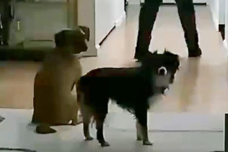 Die Hunde wirkten ein wenig erstaunt.