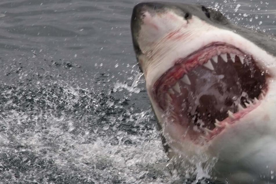 Hai tötet Taucher, Begleiterin mit Schock im Krankenhaus