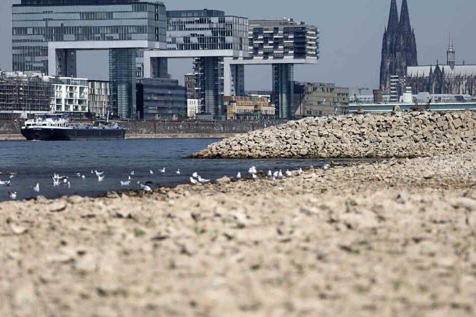 Zurzeit beträgt der Wasserstand des Rheins bei Köln nur rund 1,30 Meter (Symbolbild).