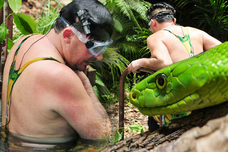 Wegen dieser Memme lohnt sich das Dschungel-Gucken doch langsam